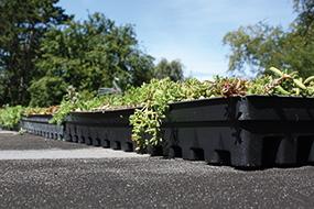 BGreen-it Sedumbakker – Når du vil anlægge grønne tage i én arbejdsgang
